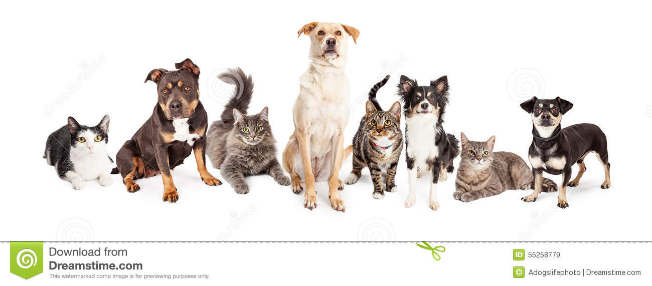 Large Group Of Cats And Dogs Together Stock Photo Image