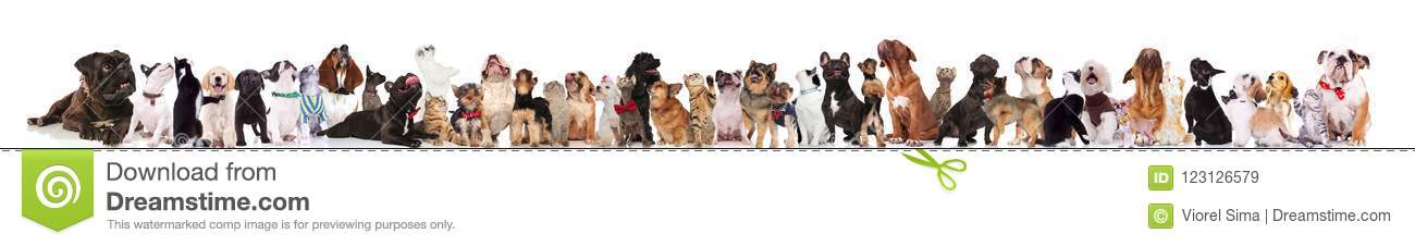 Large group of curious dogs and cats looking up