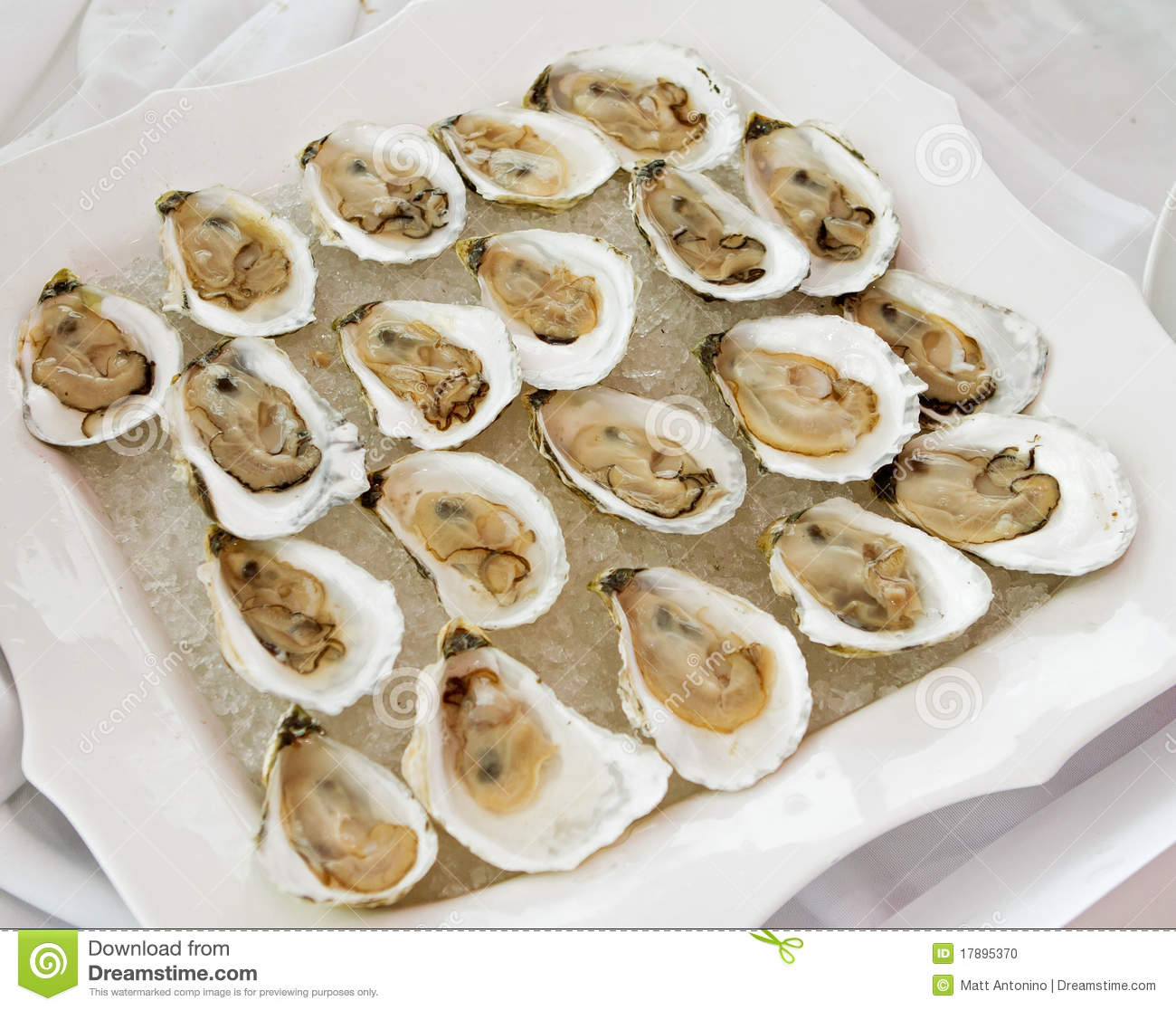 Group Of Oysters 34