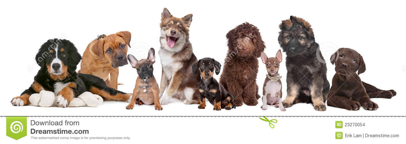 Large Group Of Puppies Stock Photo Image Of Down