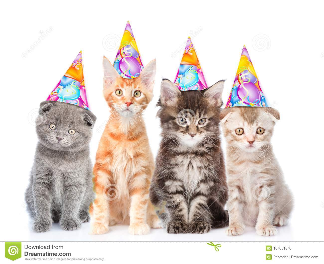 Large Group Of Small Cats With Birthday Hats Isolated On White
