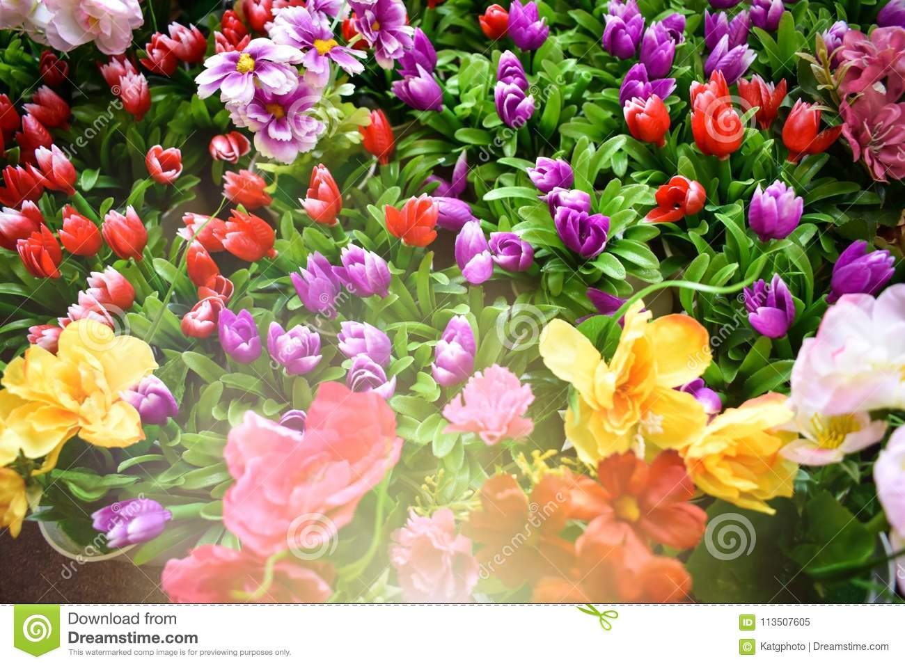 Large Group Spring Flowers Together With Bright Sunlight Shining On