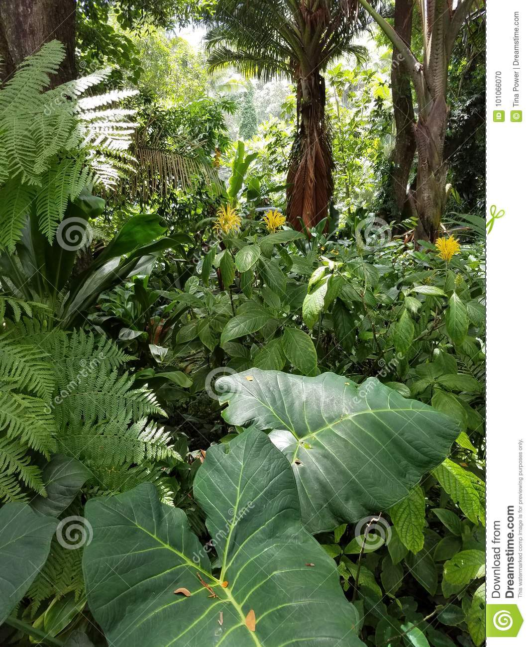 Large heart shaped leaves ferns and yellow flowers stock photo large heart shaped leaves ferns and yellow flowers mightylinksfo