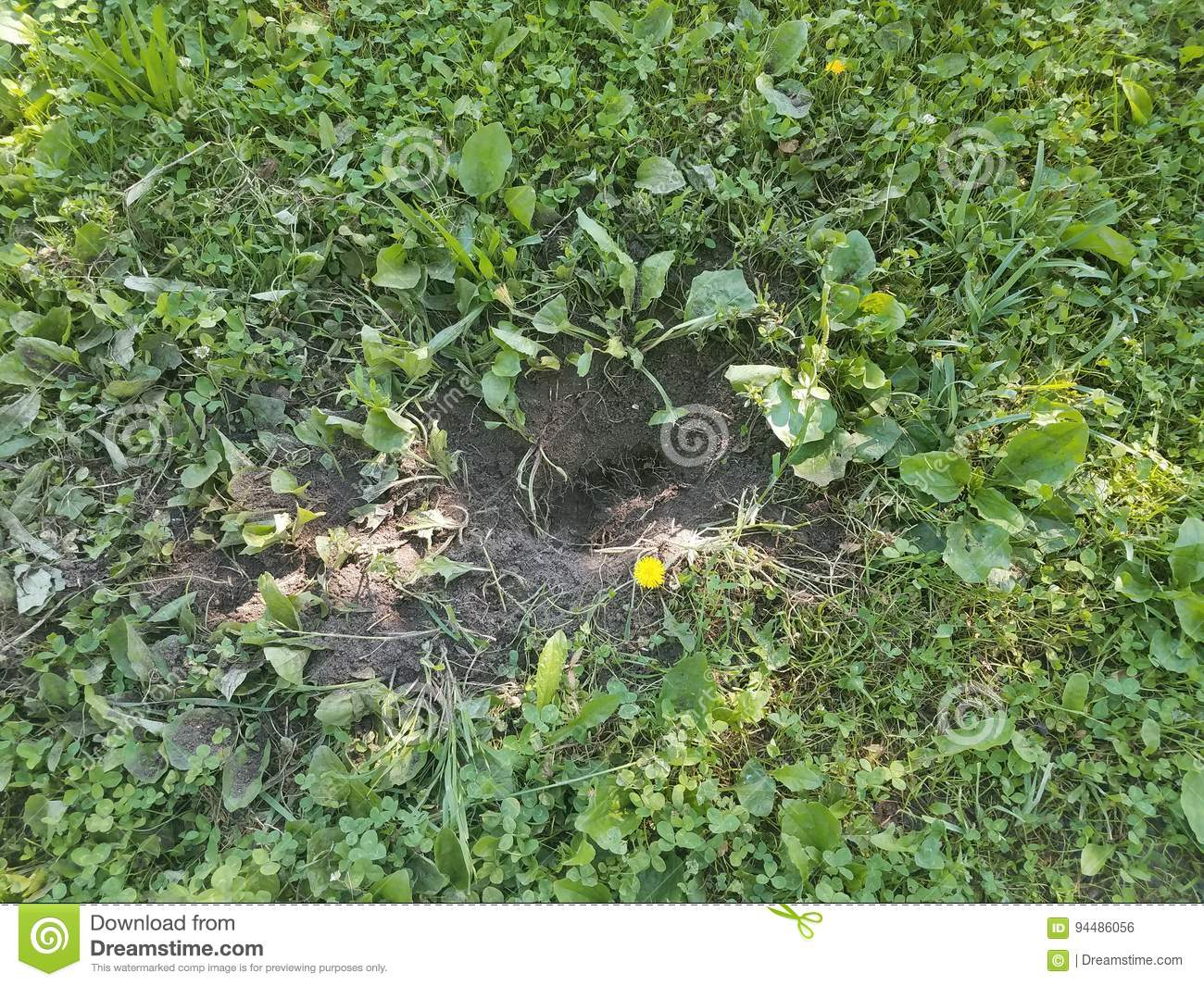 Large hole dug in grass by an animal