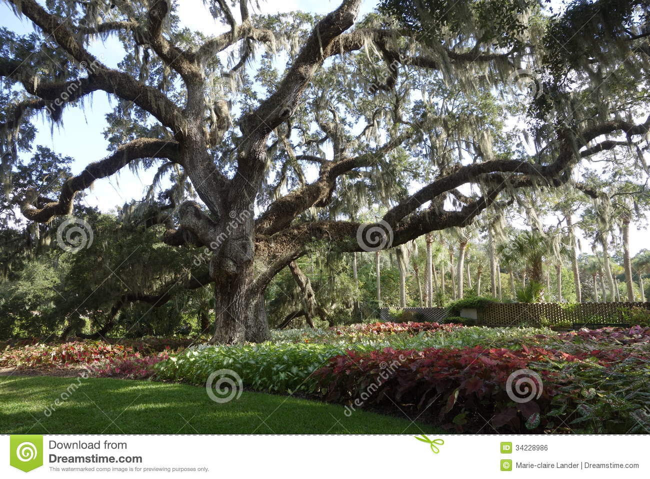Large live oak in south carolina public garden royalty for Landscaping plants south carolina