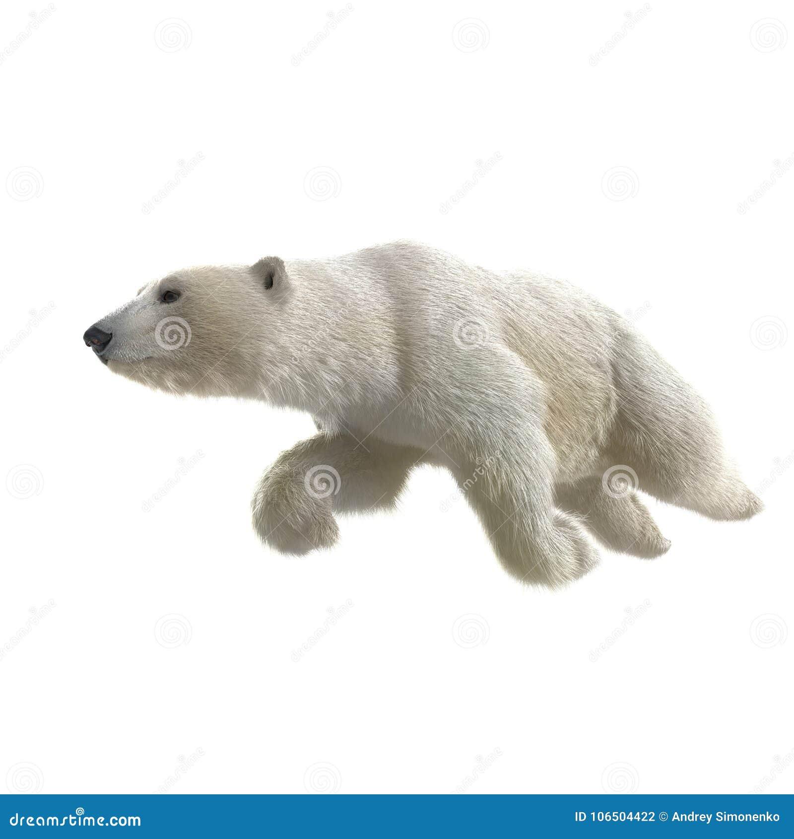 Polar Bear Swimming Clipart - wallpaper.