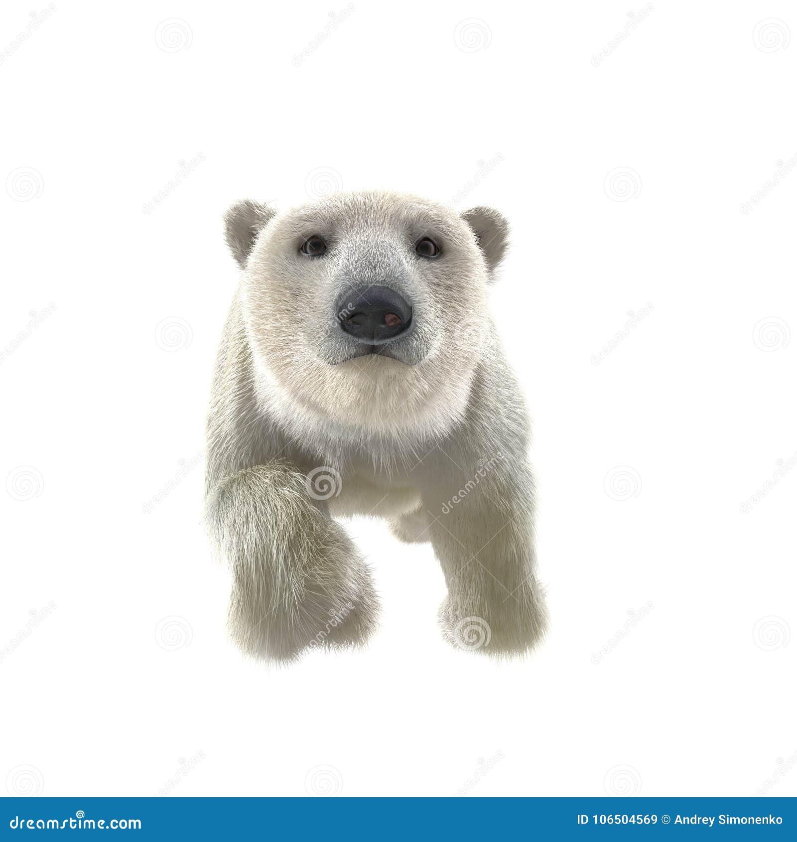 168 Polar Bear Swimming Illustrations, Royalty-Free Vector Graphics & Clip  Art - iStock