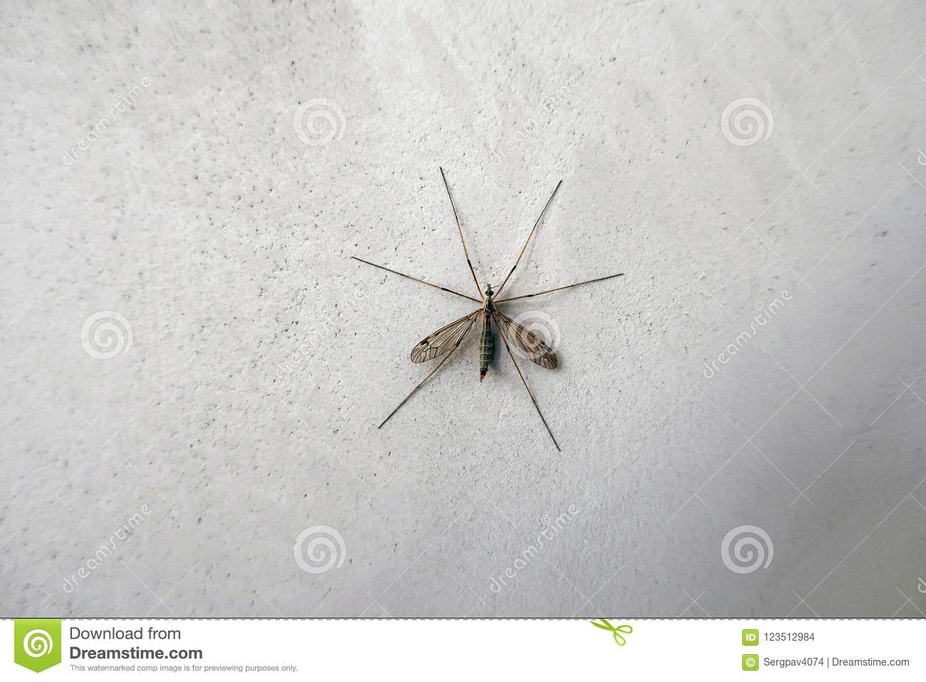 Big mosquito on the wall