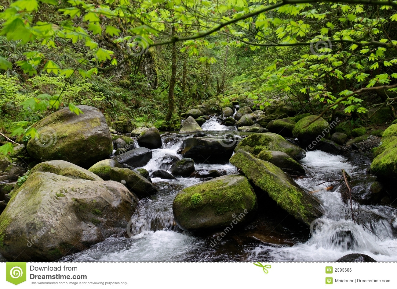 ... Stones In A Mountain Stream Royalty Free Stock Image - Image: 2393686