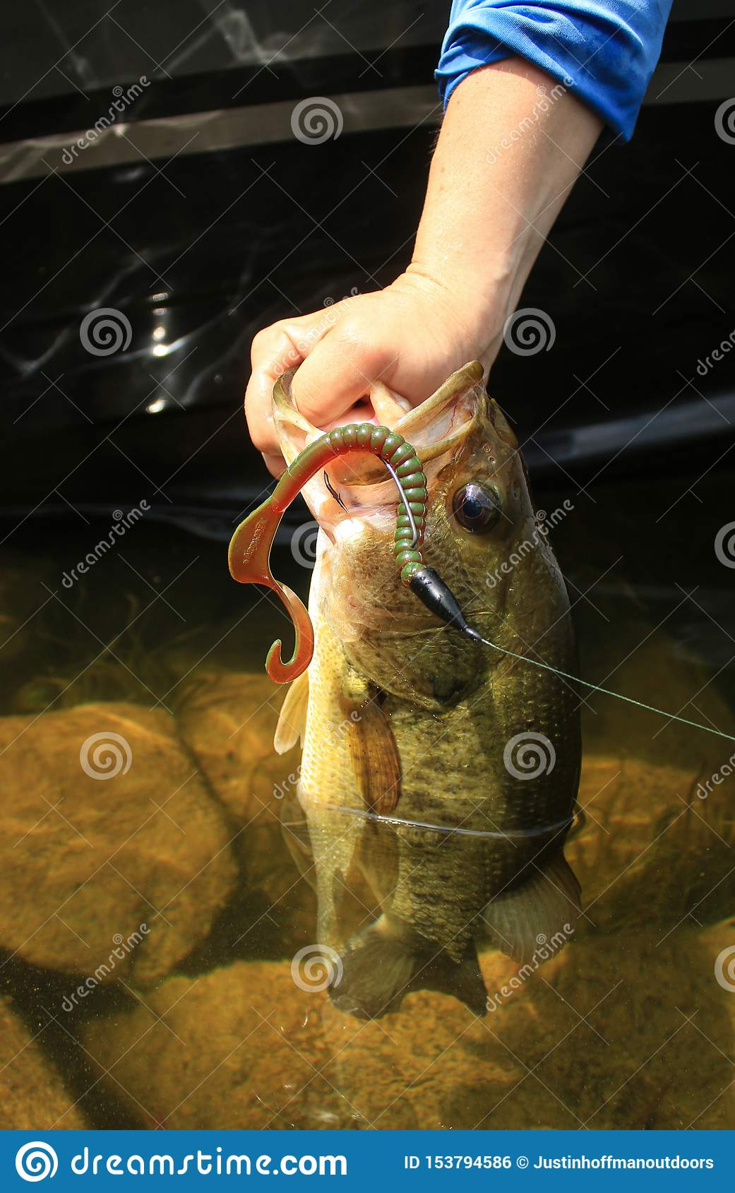 Large Mouth Bass Fishing With Plastic Worm Lure