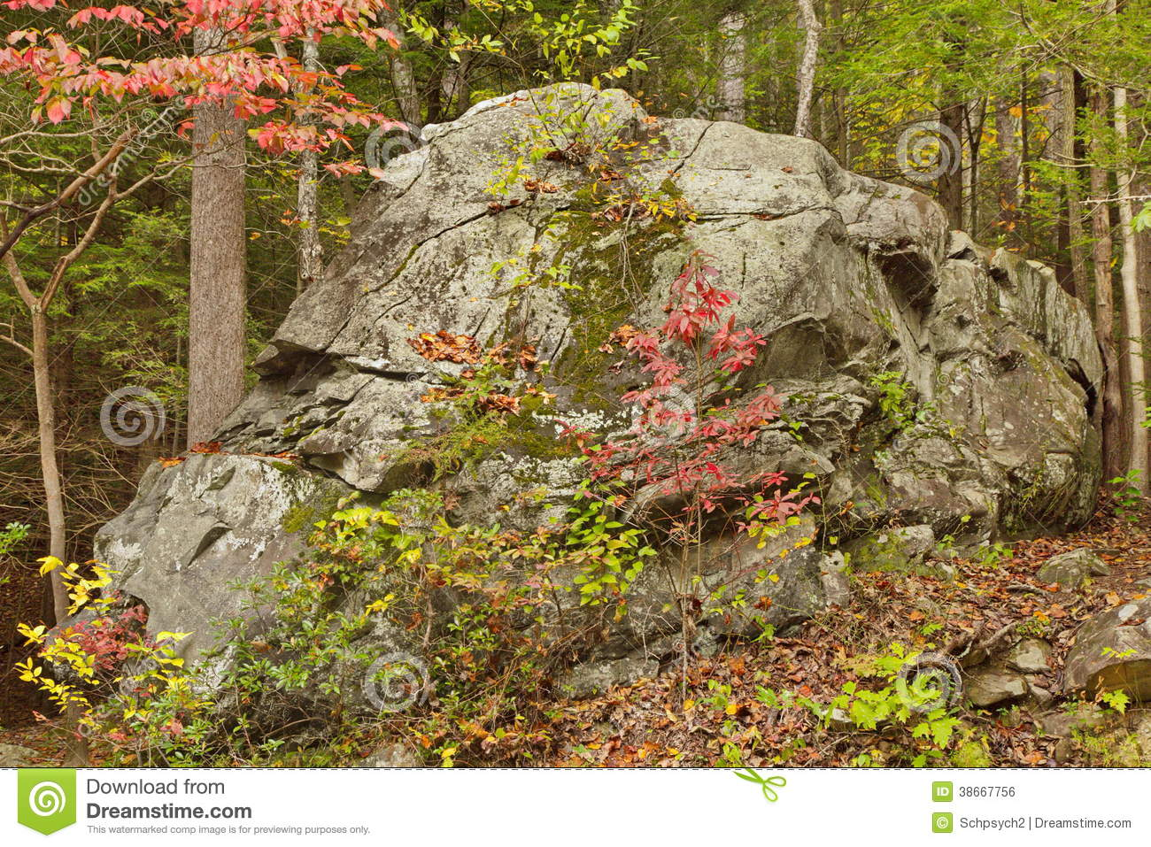 Large Old Rock Along Roaring Fork Motor Trail Fall Royalty