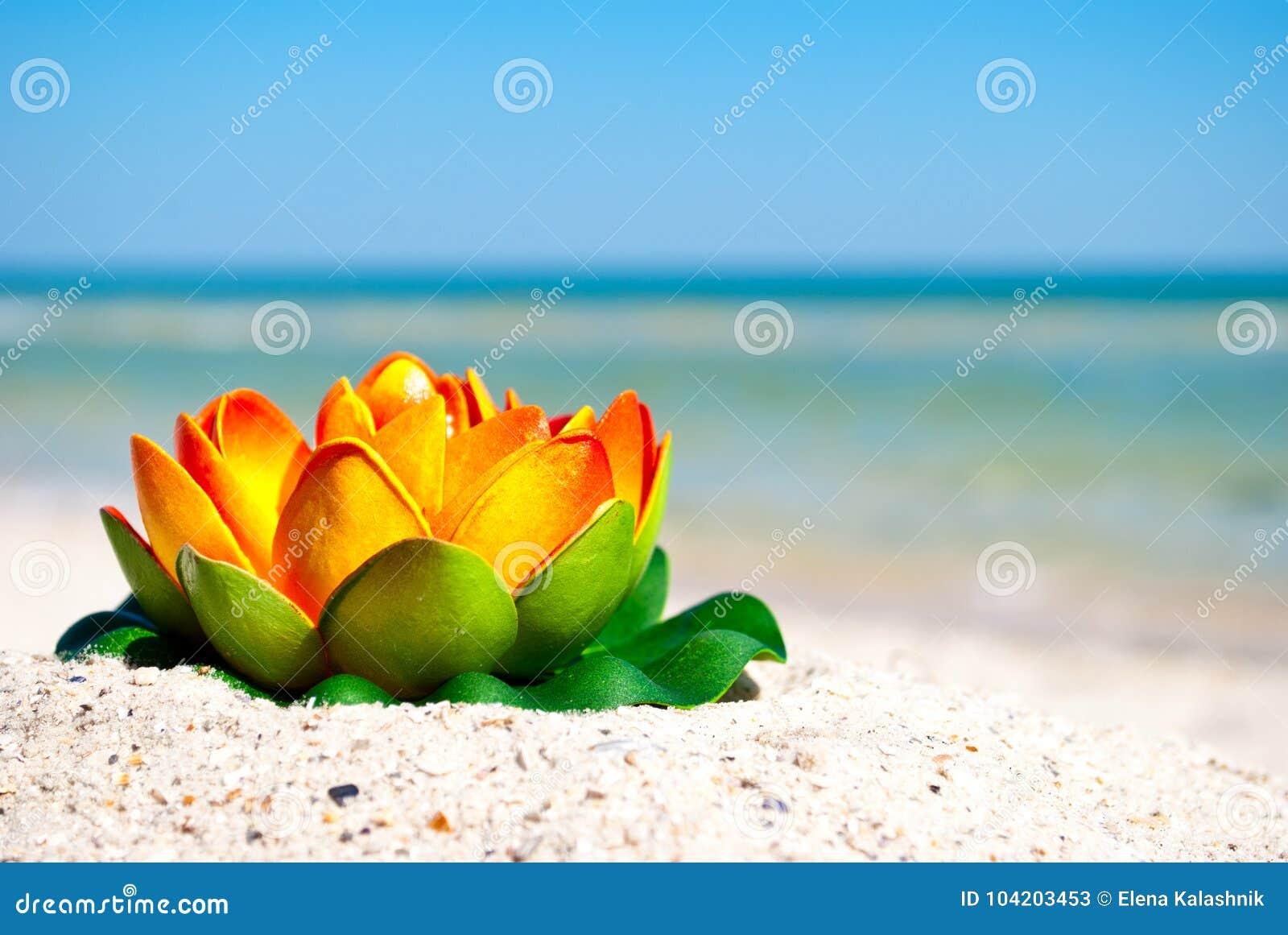 Orange lotus flower with green leaves lies on the sand on a orange lotus flower with green leaves lies on the sand on a background of blue sea izmirmasajfo