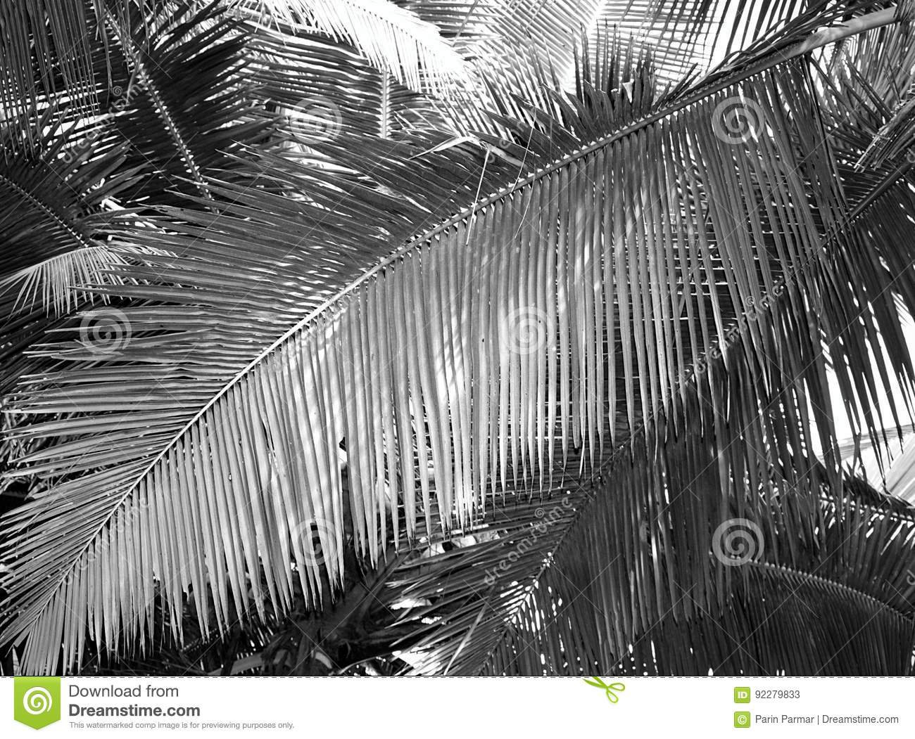 Large Palm Leaf - Abstract Background in Grey Scale