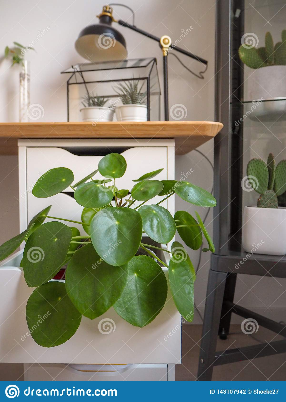 Industrial Study Room: Large Pancake Plant In An Industrial Black And White Study