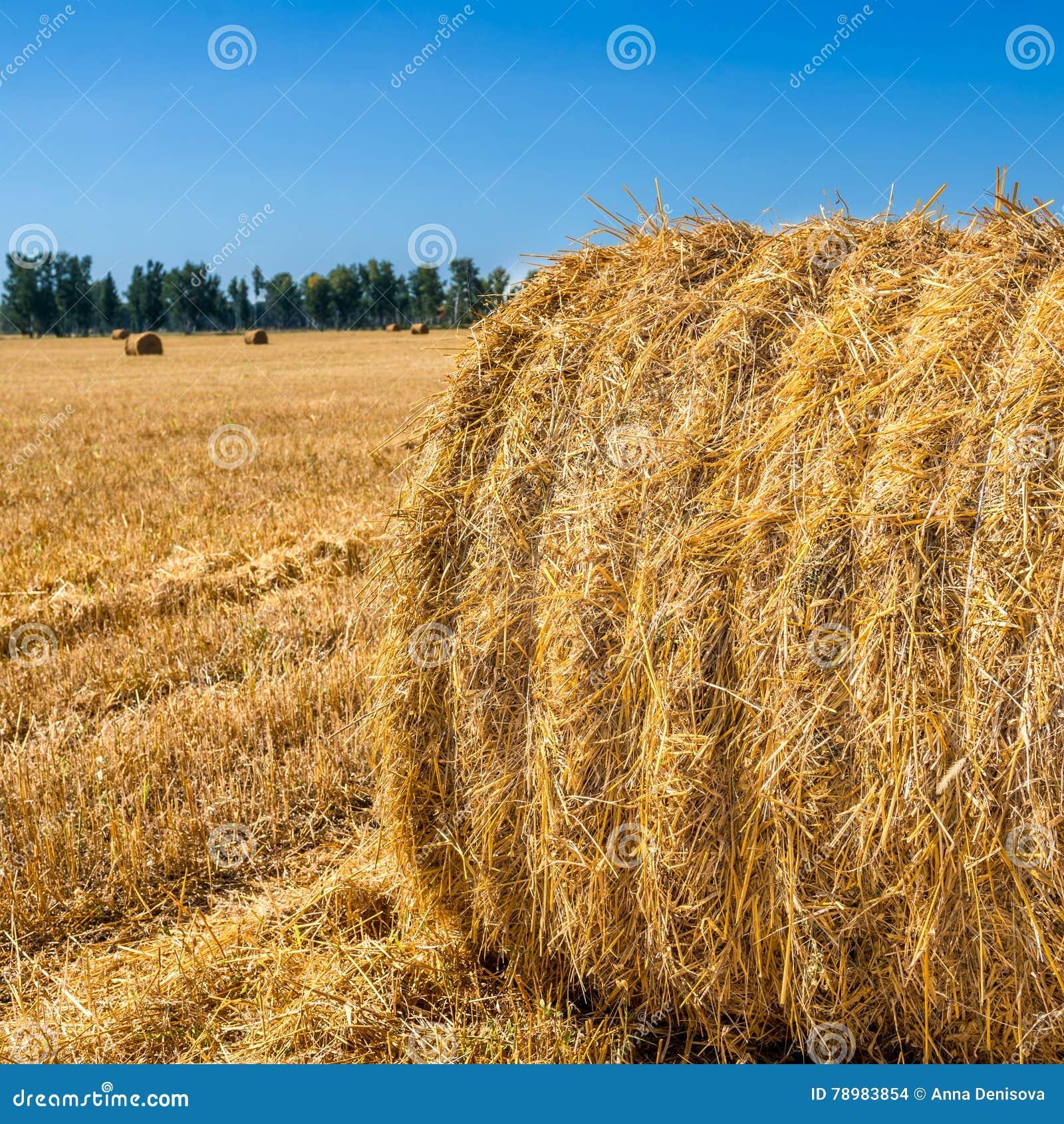 Large Piles of Hay Bales