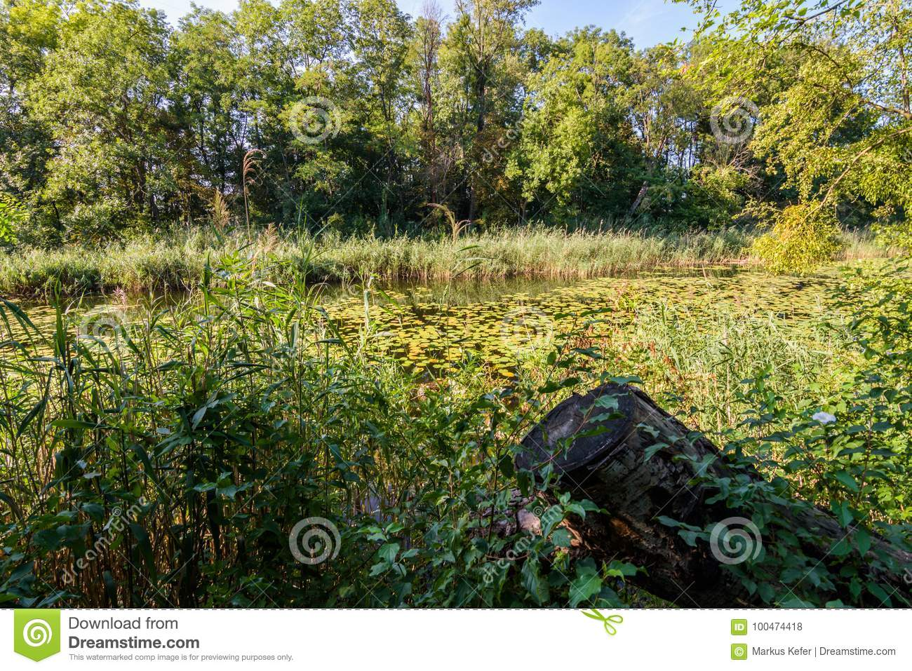 Large Pond In The Forest Of Lobau Stock Photo Image Of Outdoor