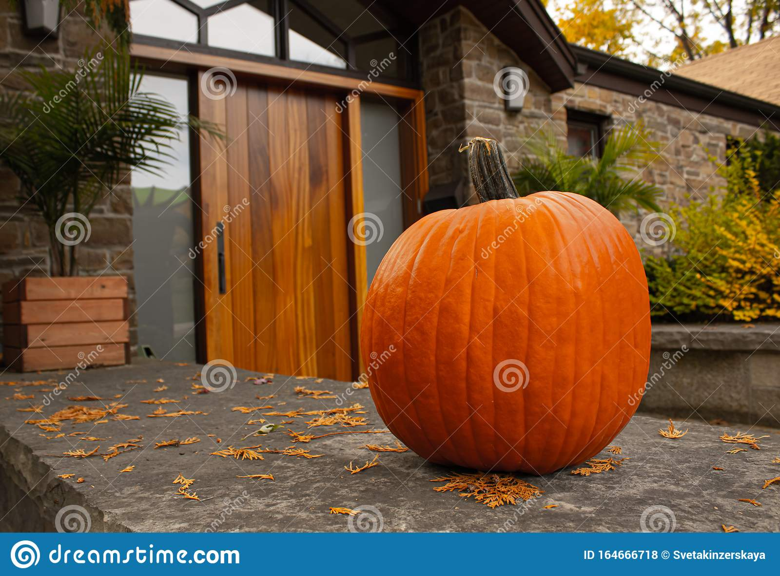 Large Pumpkin Standing At The Front Doors Outside Of The Fancy Home Season Outdoor Decoration For The Halloween In Usa Stock Photo Image Of Cute Door 164666718