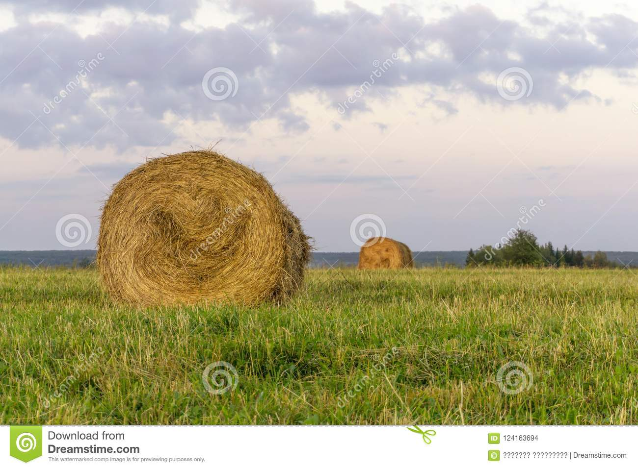Round bales of hay on a beveled meadow