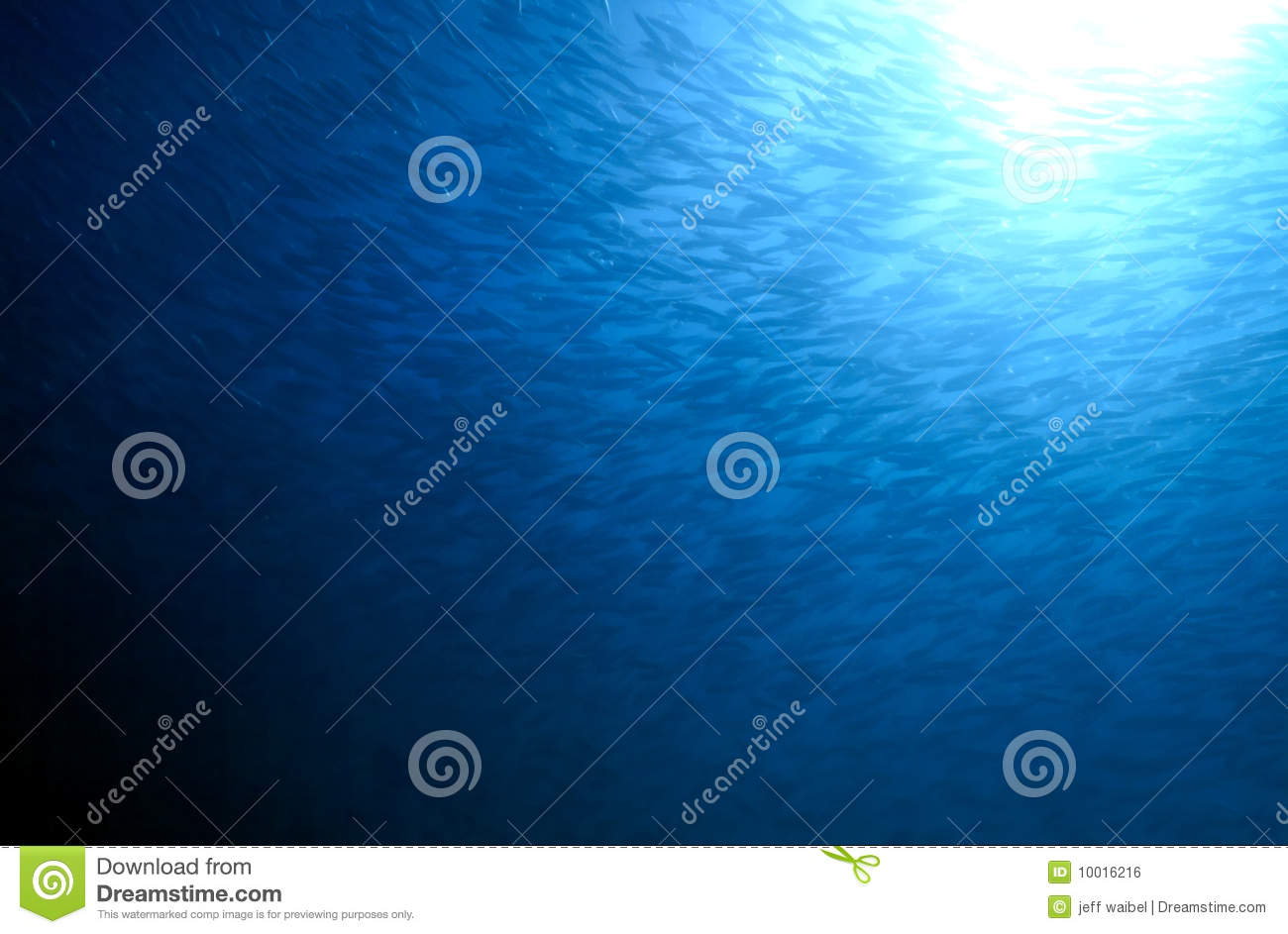 Download Large school of fish stock photo. Image of below, diving - 10016216