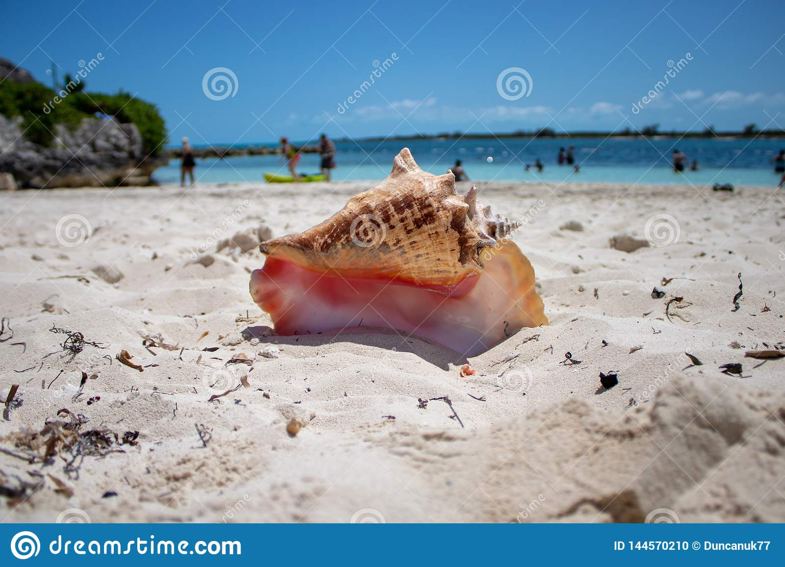 Large shell on a tropical beach