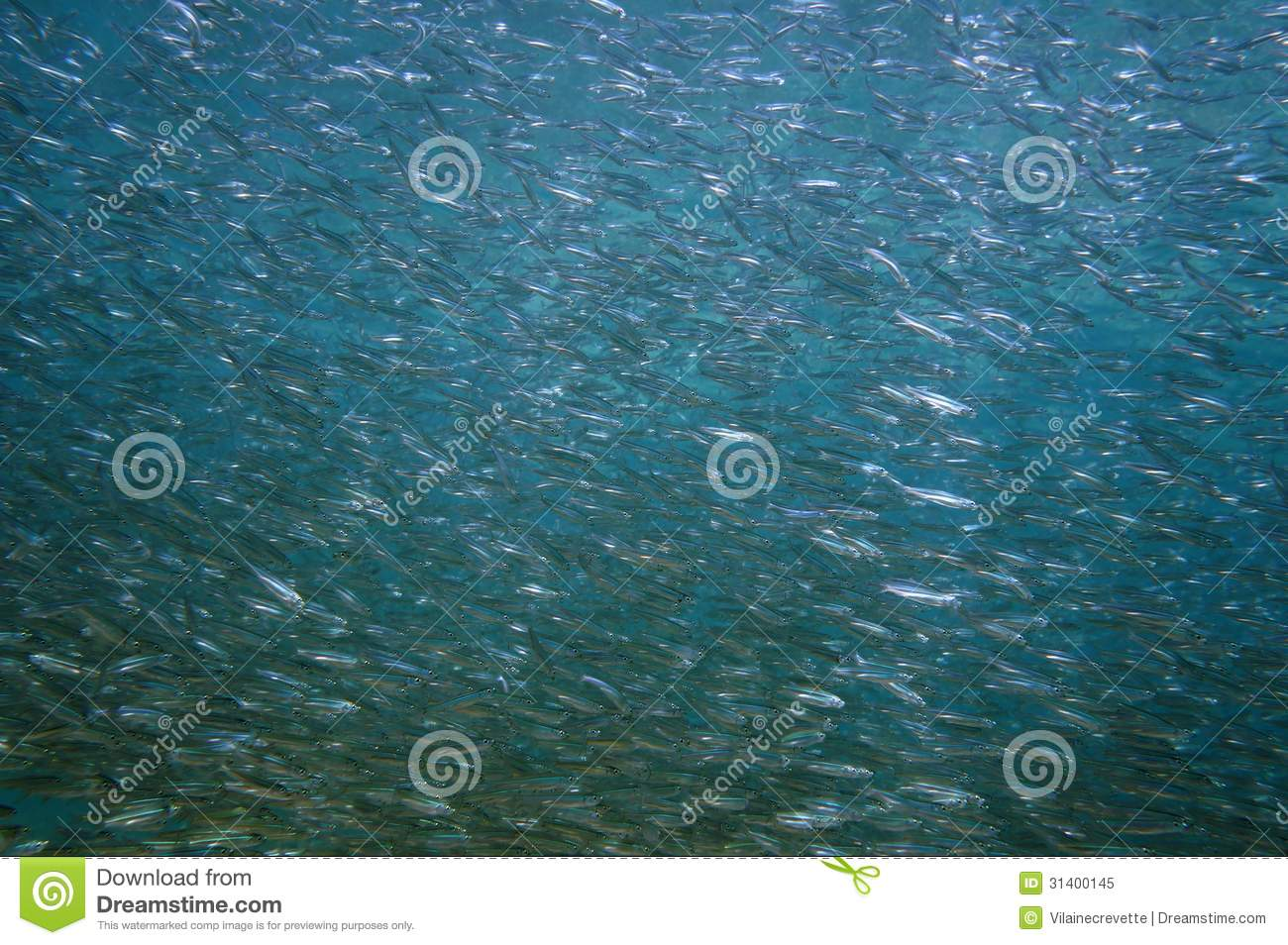 Large shoal of young fish royalty free stock photo image for Large ocean fish