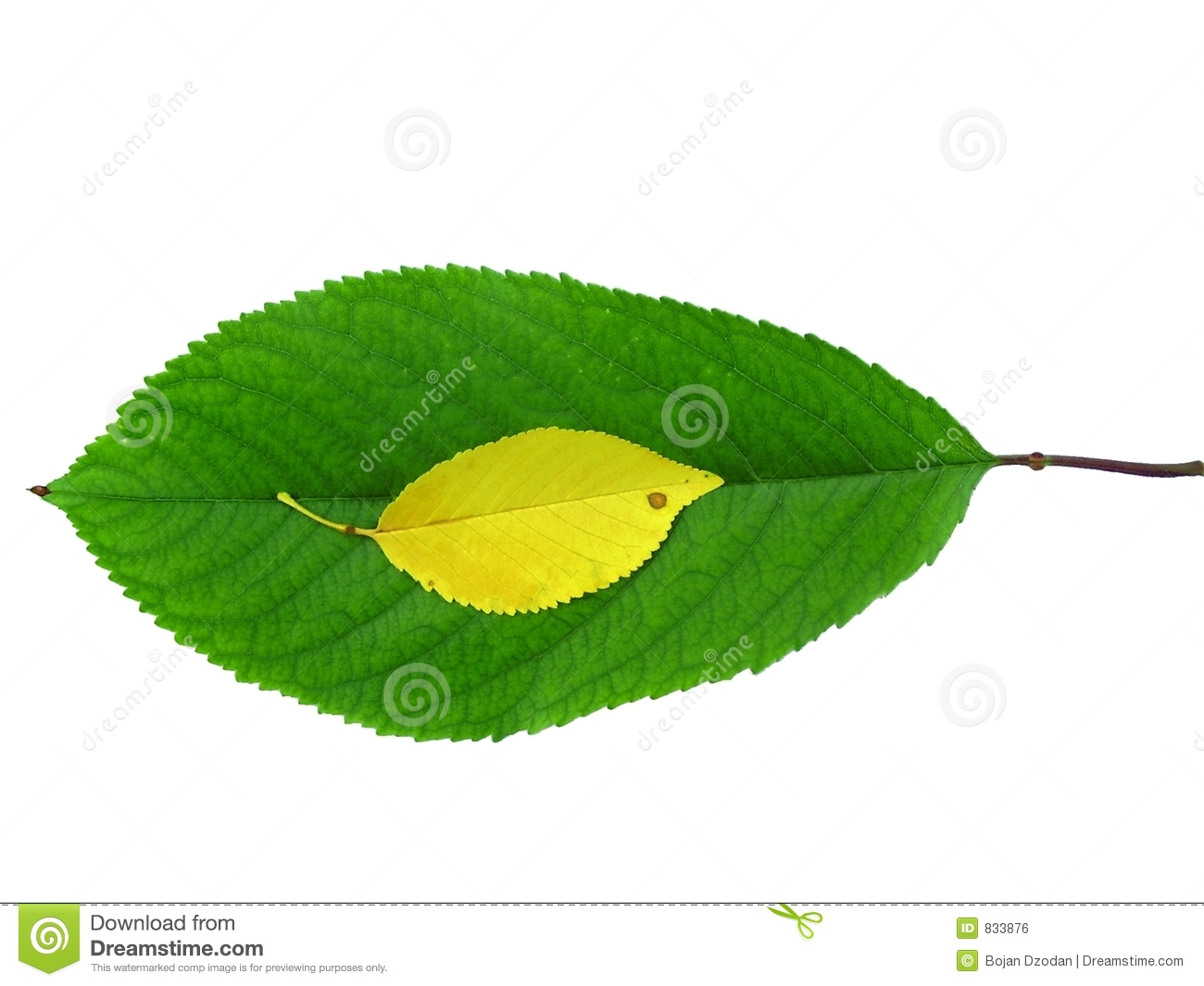 Large and small leafs