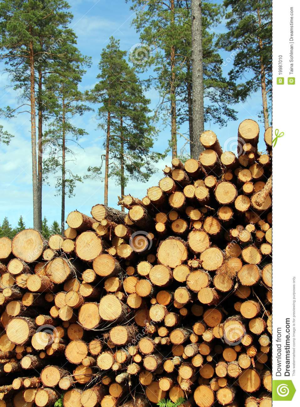 a large stack of wood with pine trees background stock