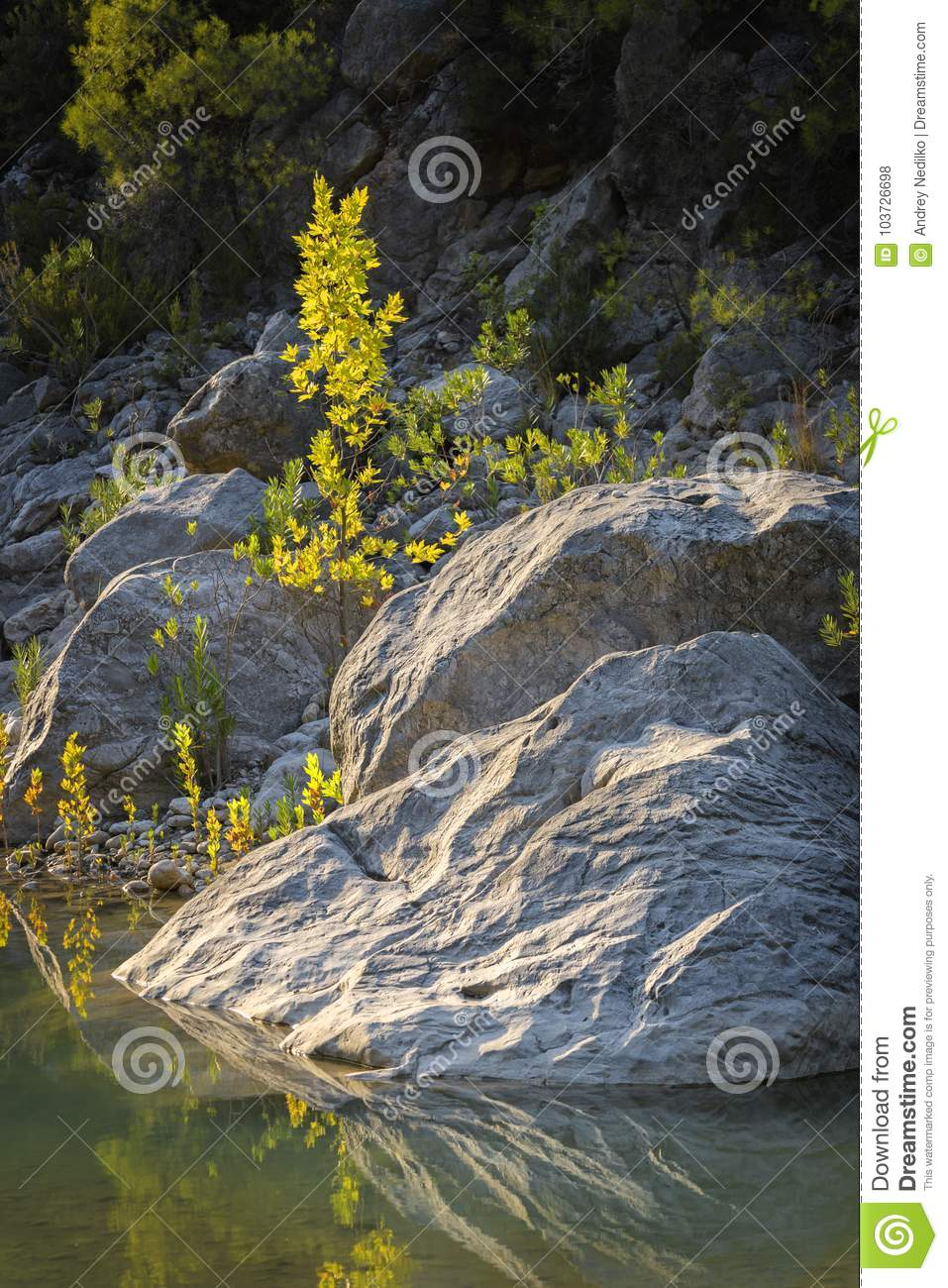 Large stones and a small tree on the river bank.
