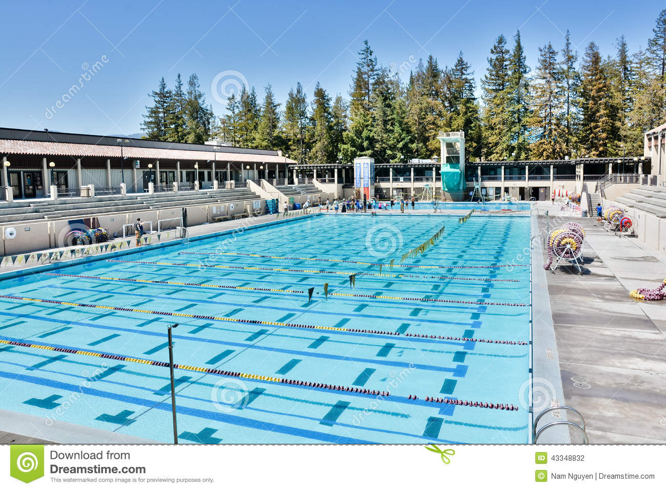 Olympic Sized Swimming Pool Stock Image 21376657