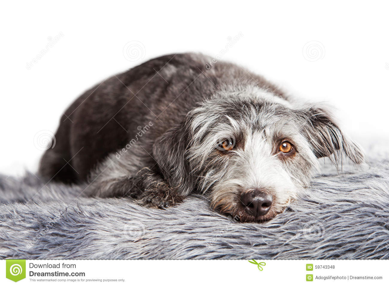 What Breed Is My Dog Upload Picture