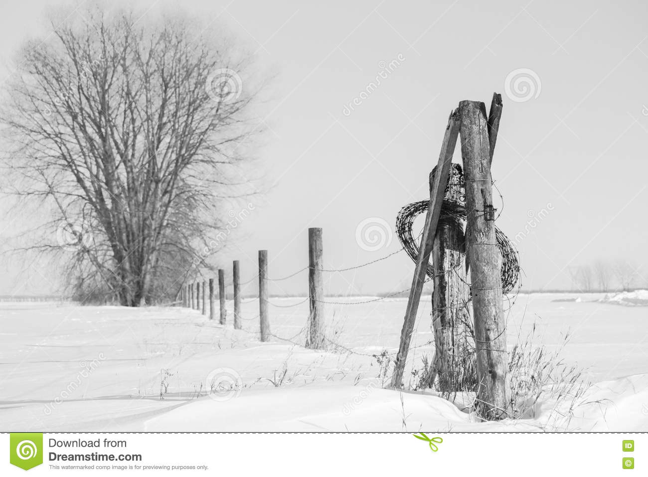 Large Tree With A Barb Wire Fence Post Running Past It Into The ...