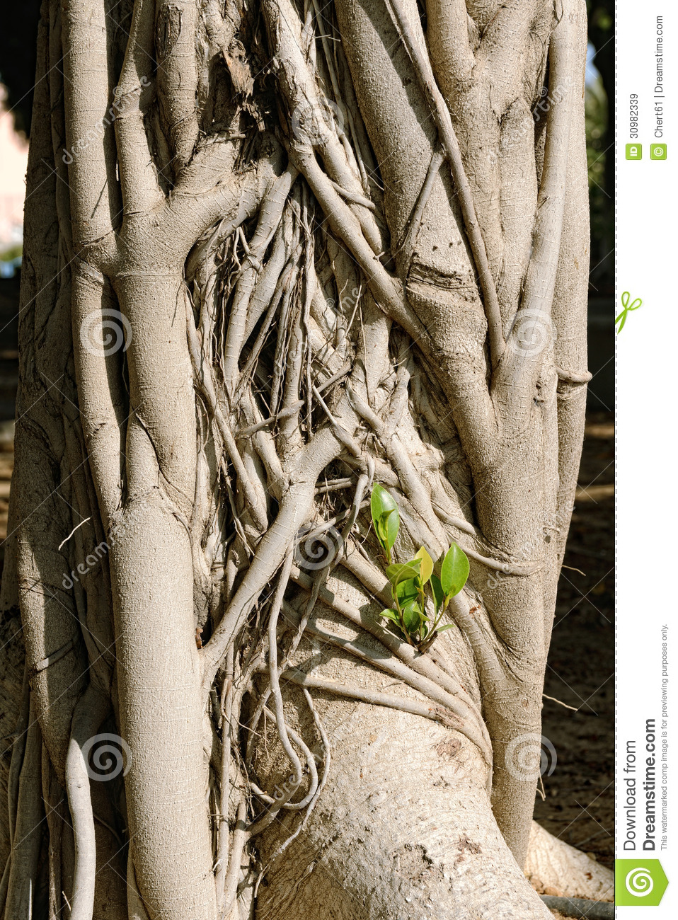 Large Trunk Royalty Free Stock Images - Image: 30982339