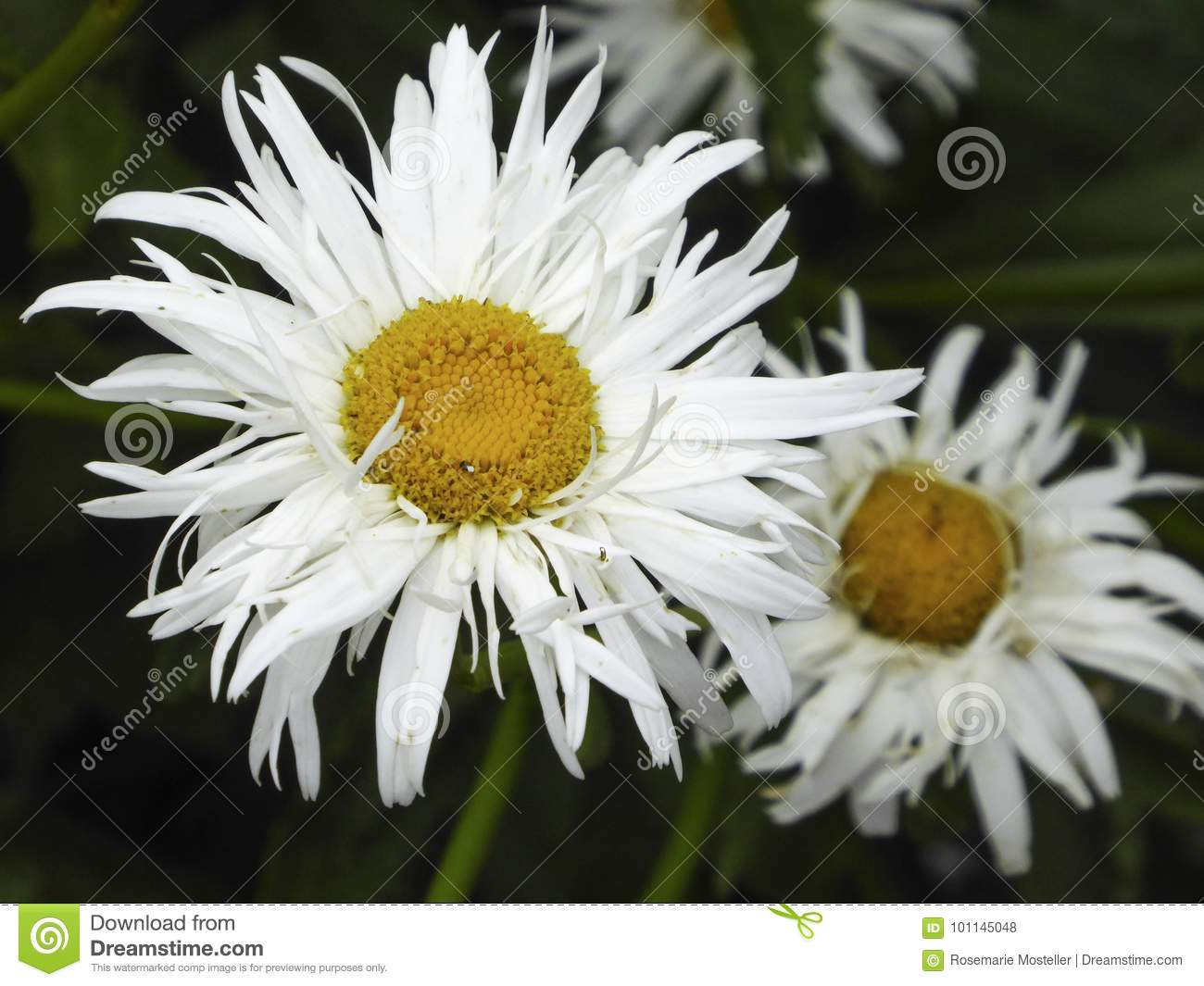 White flower stock photo image of green color blooming 101145048 download comp izmirmasajfo