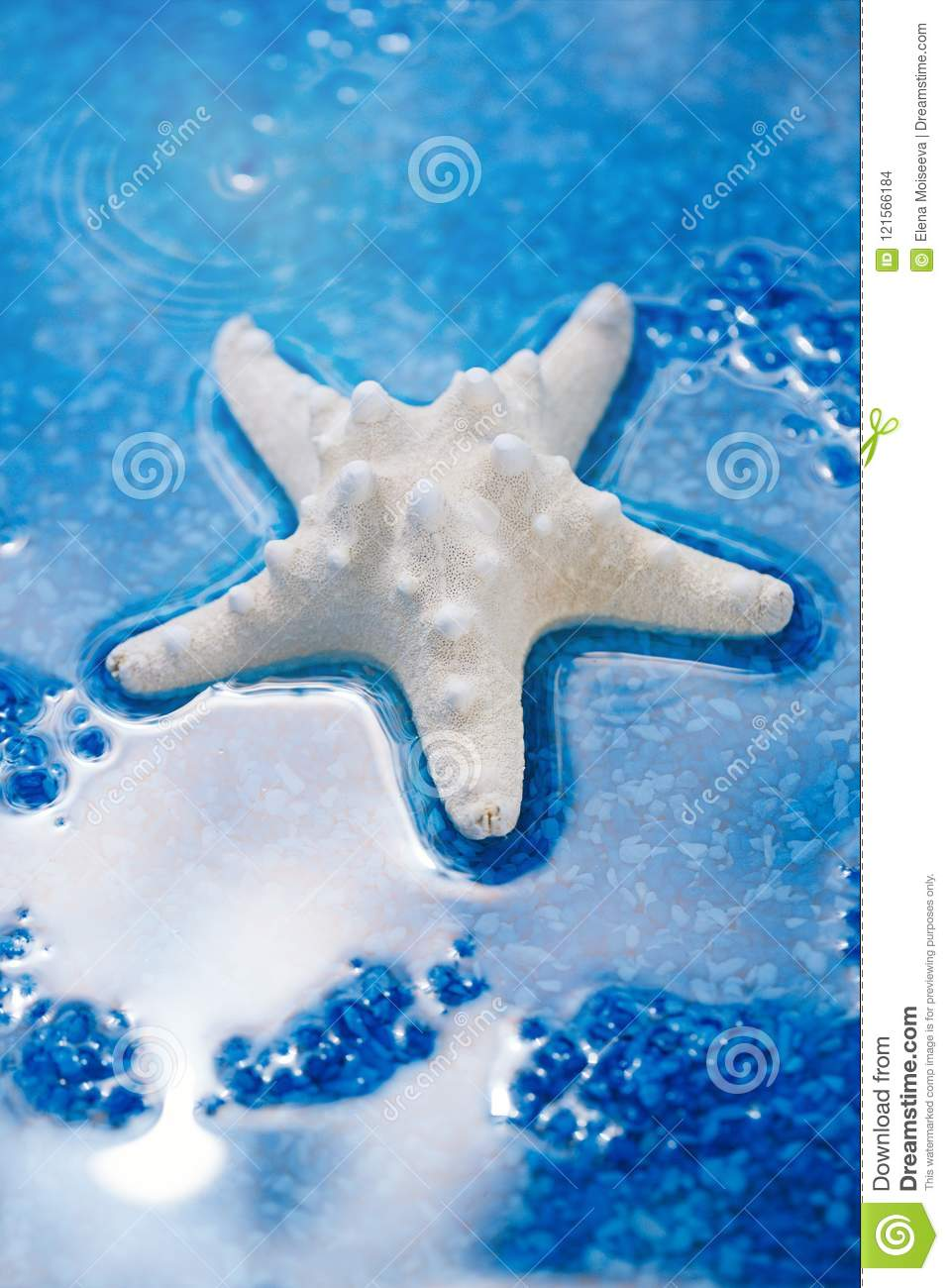 large white starfish sea shell on blue pebble