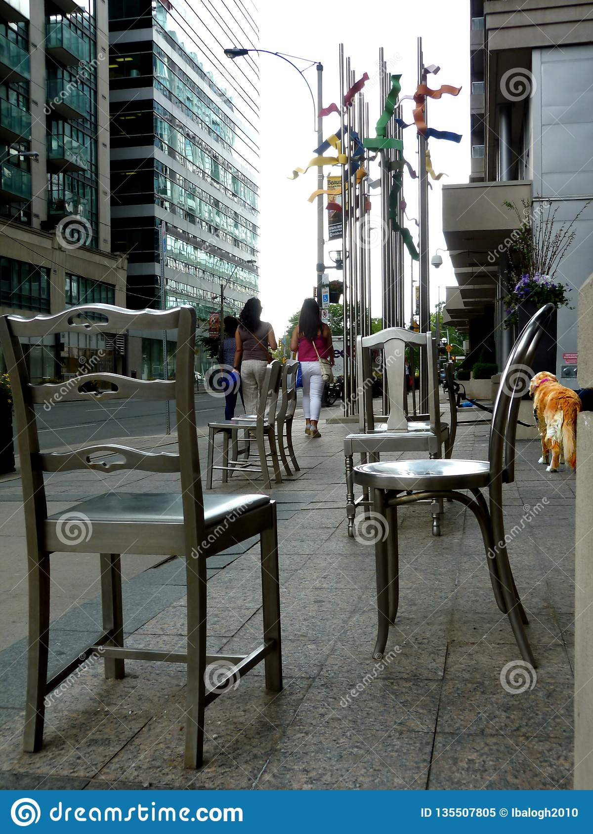 An urban dog`s life in the big city