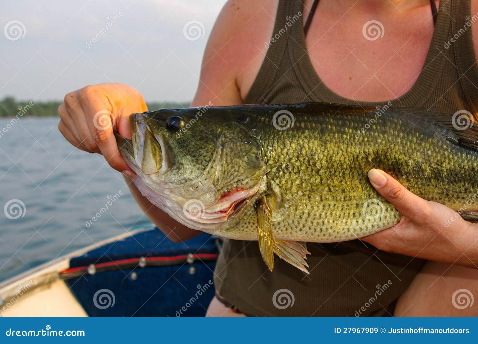 Largemouth Baarzen die door een Vrouw worden gehouden