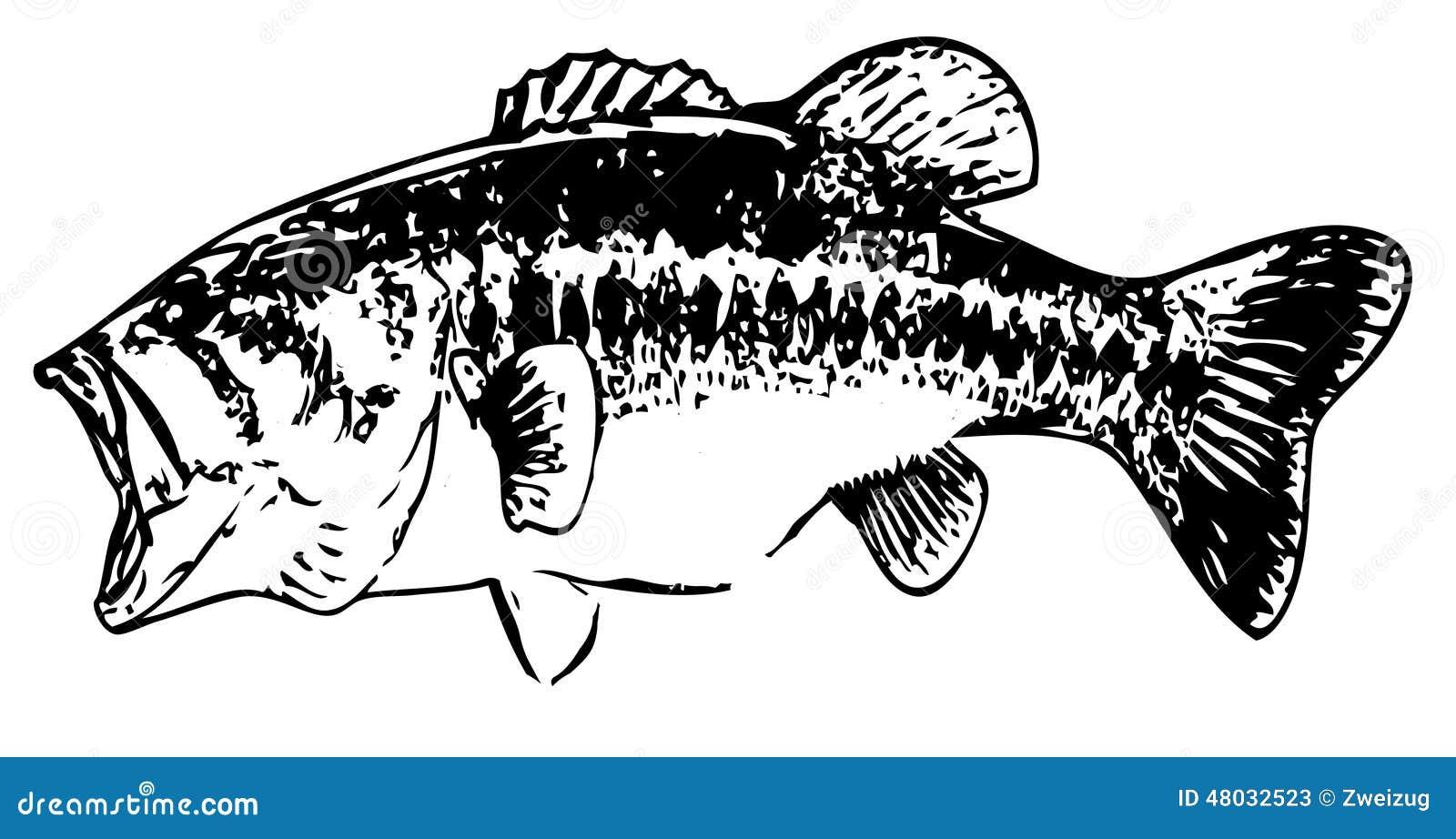 largemouth bass stock illustrations 260 largemouth bass stock rh dreamstime com Largemouth Bass Logo largemouth bass clip art free