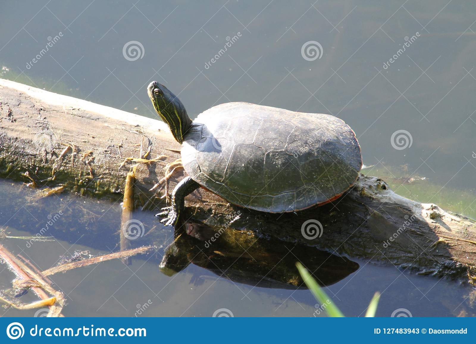A larger turtle sitting on a log
