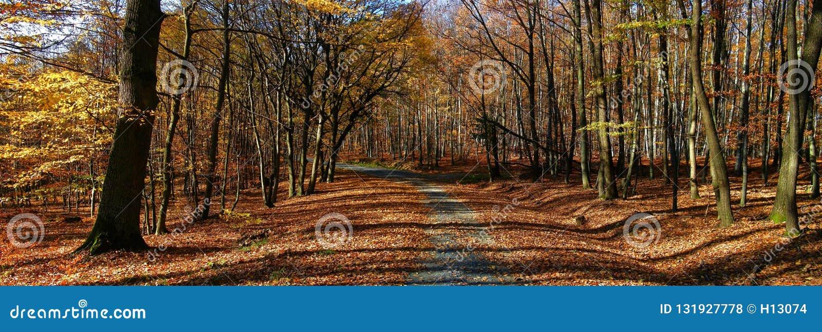 Larges forêt/région boisée d arbres de feuille avec la route de gravier à la lumière du jour d après-midi d automne