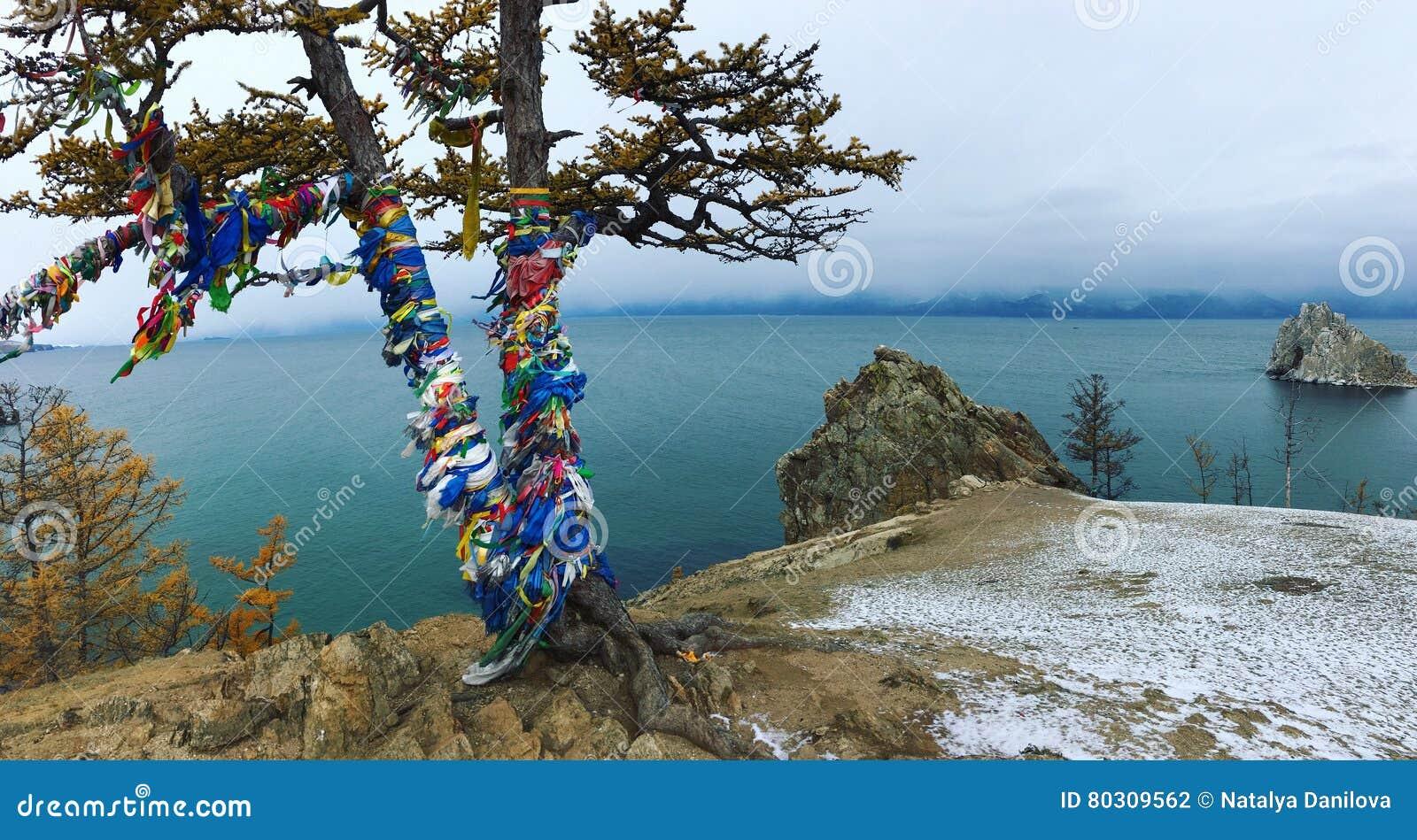 Larice sulla banca del lago Baikal