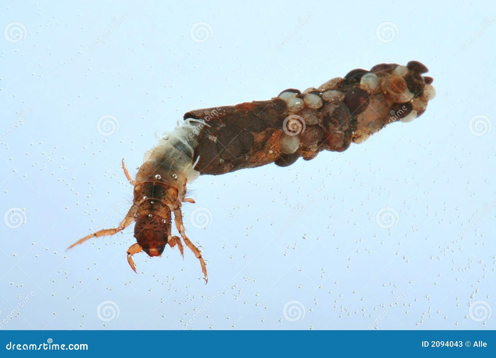 Larva de la mosca de Caddis
