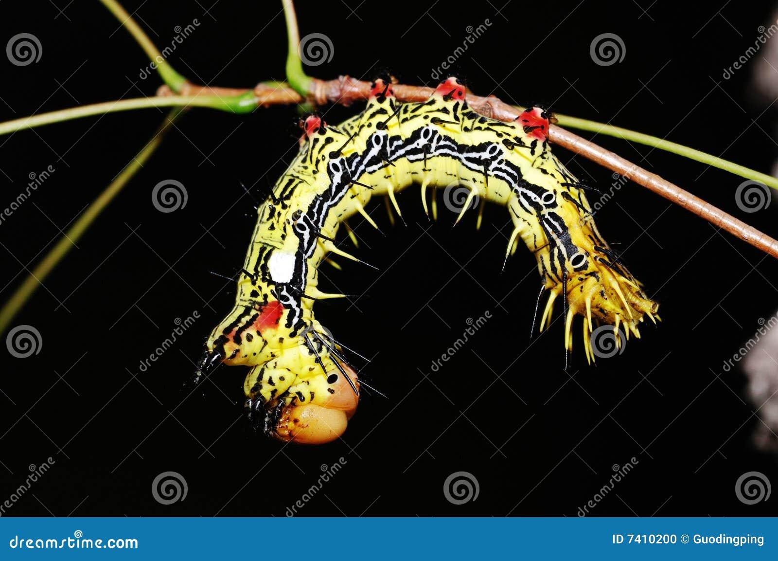 Larve de mite photo stock image du faune variationnel - Larve de mite ...