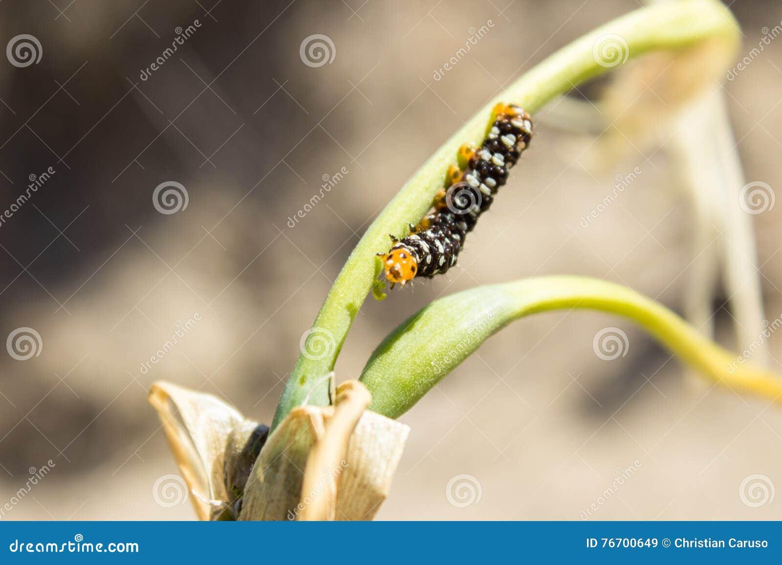 Larven är förtjust av växter och blommor