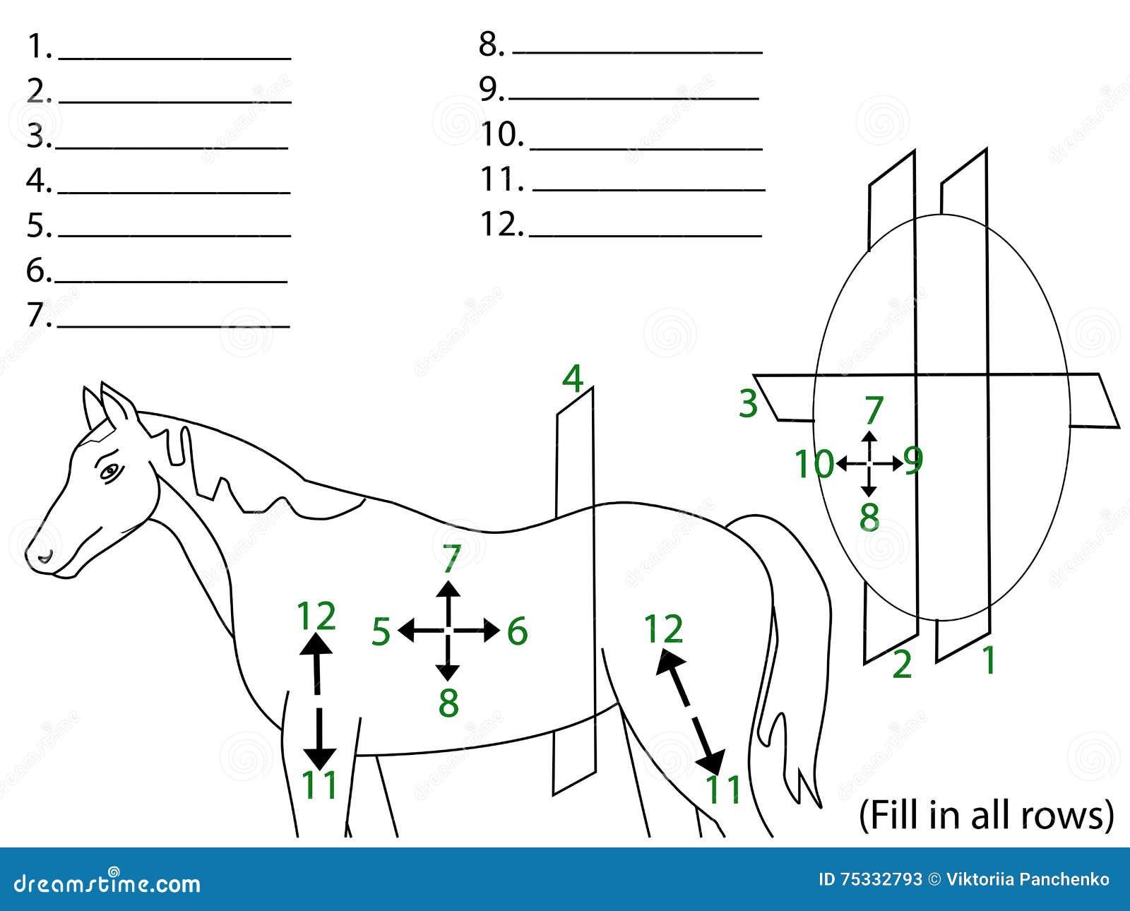 Las áreas Anatómicas Del Cuerpo Ilustración del Vector - Ilustración ...