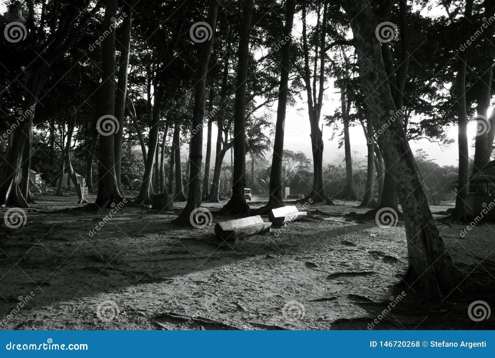 Las, ławka i budy przy plażą,