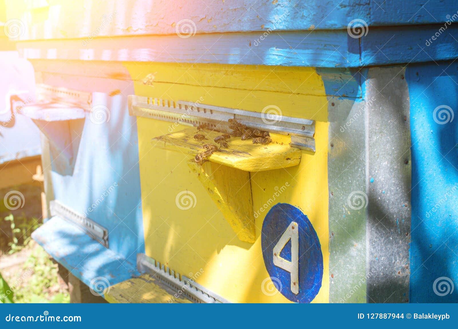 Las abejas de la miel vuelan cerca de la colmena