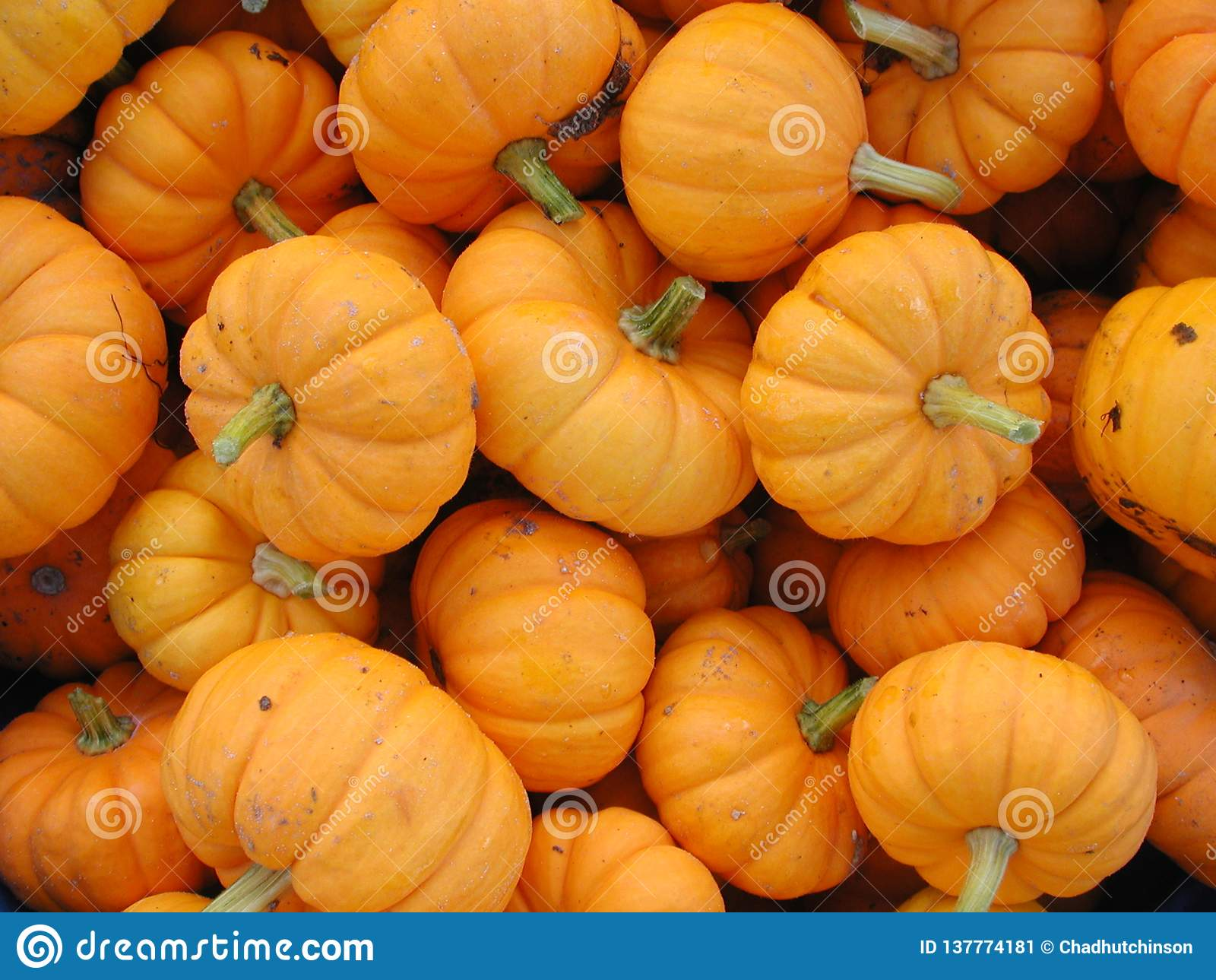 Las calabazas pequeñas, anaranjadas agruparon en venta