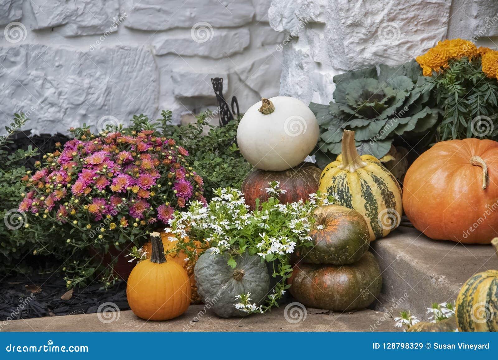 Las calabazas y las flores coloridas brillantes de otoño arreglaron en la pared de piedra pintada blanco de los agains de los pas