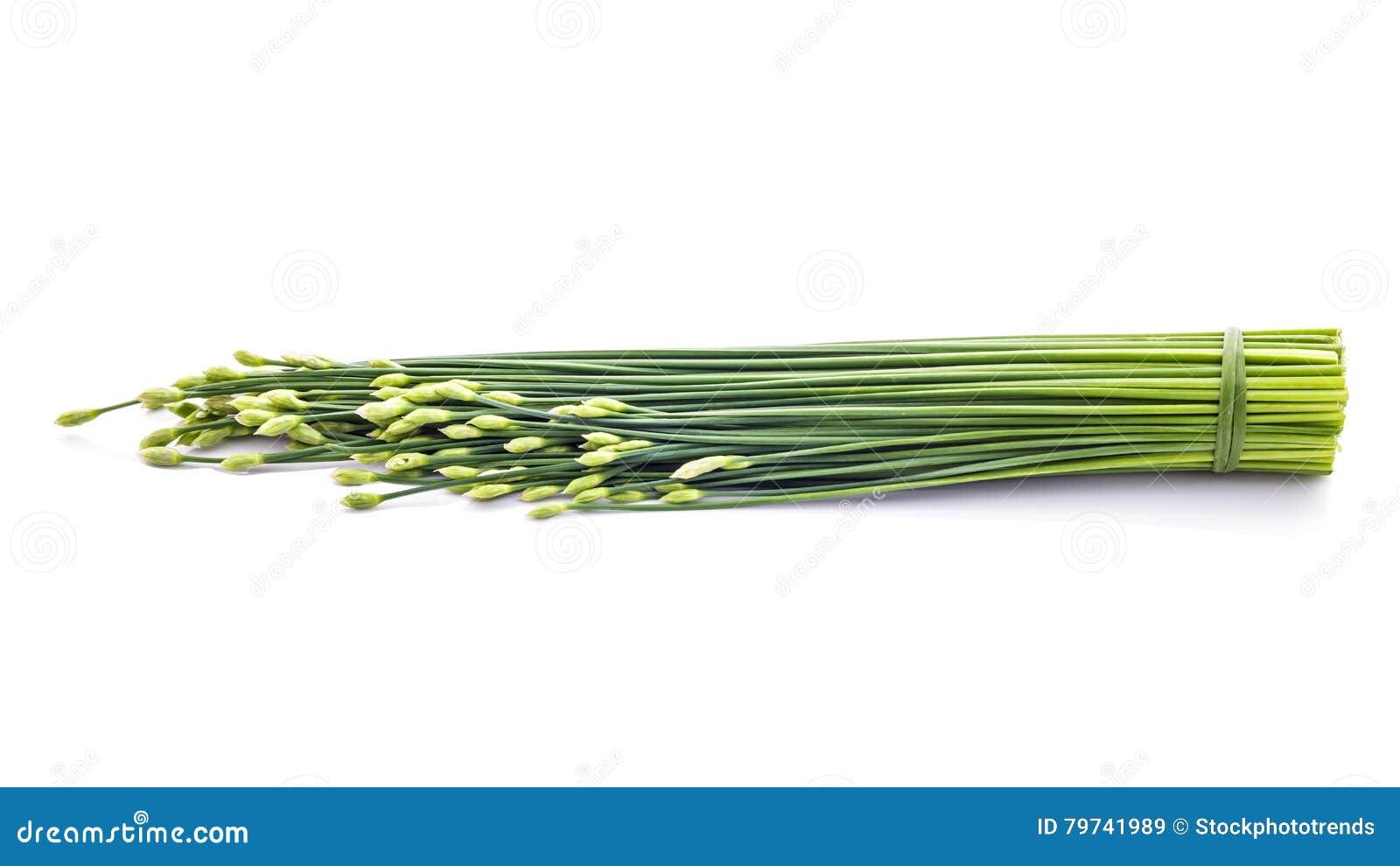 Las cebolletas florecen o cebolleta china aislada en el fondo blanco edi