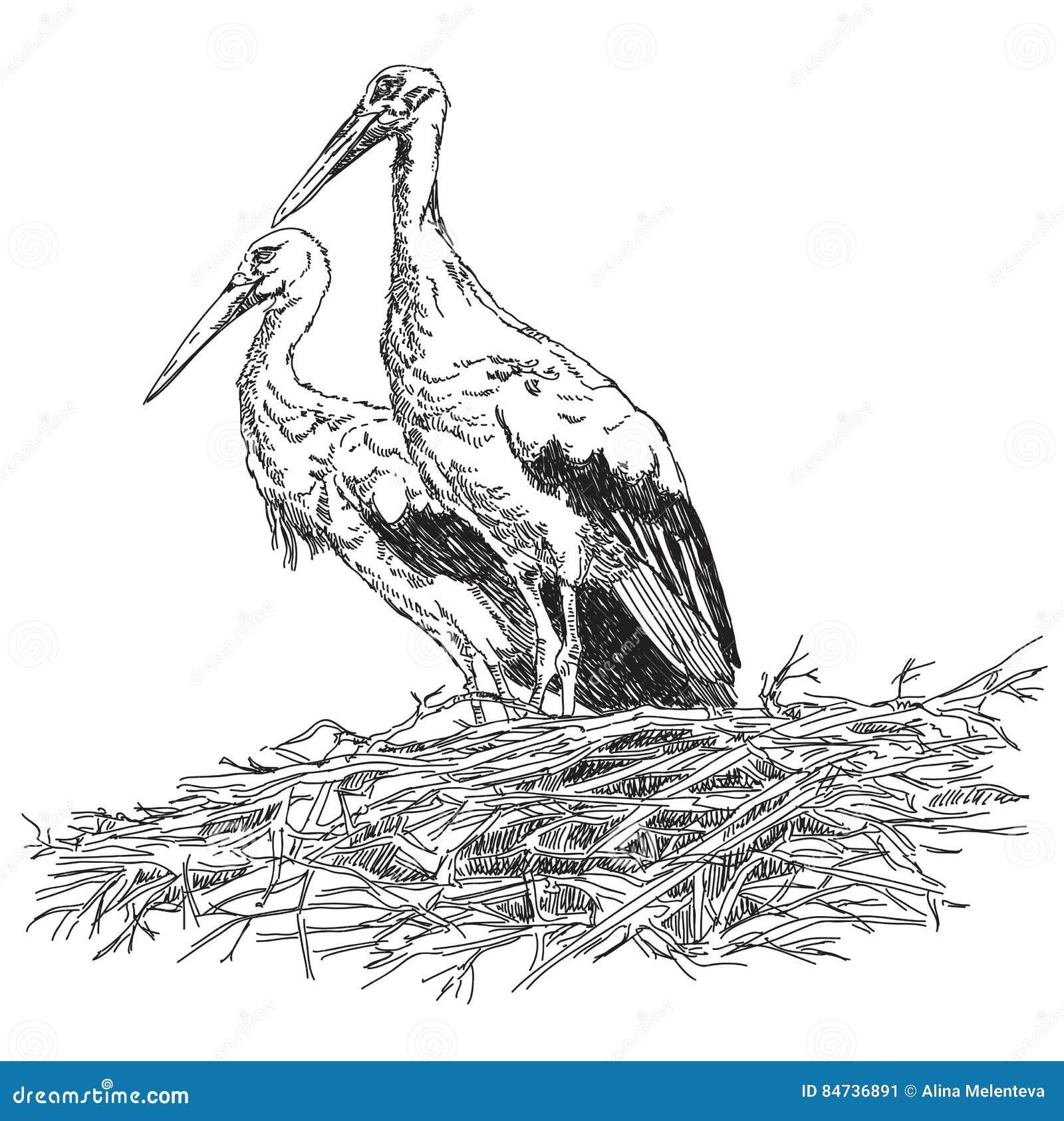 Las cigüeñas se juntan en el illustratoin del vector de la jerarquía